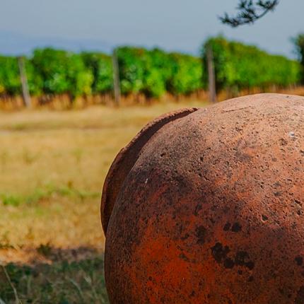 Six day wine tour in Georgia Caucasus