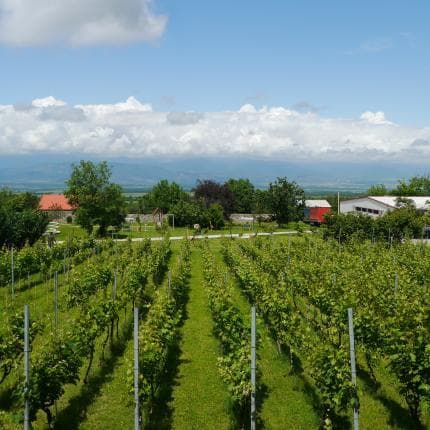 Seven day wine tour in Georgia