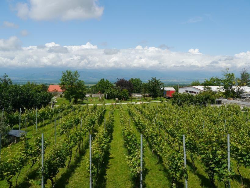 Seven day wine tour in Georgia