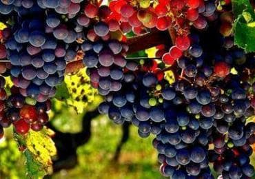Винодельни в Кахетии