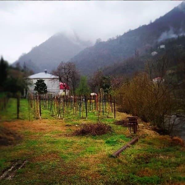 Farmstay in Georgia village near Batumi