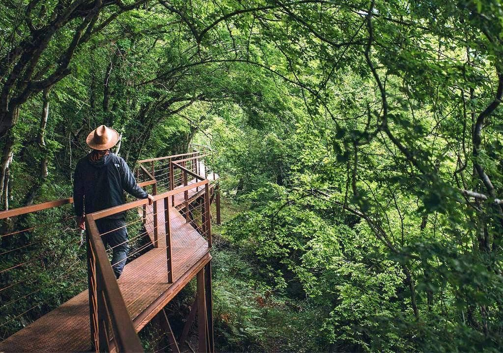 Tourist walking through Mtirala national park in Georgia