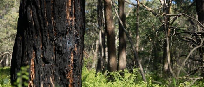 Support Australia bushfire recovery