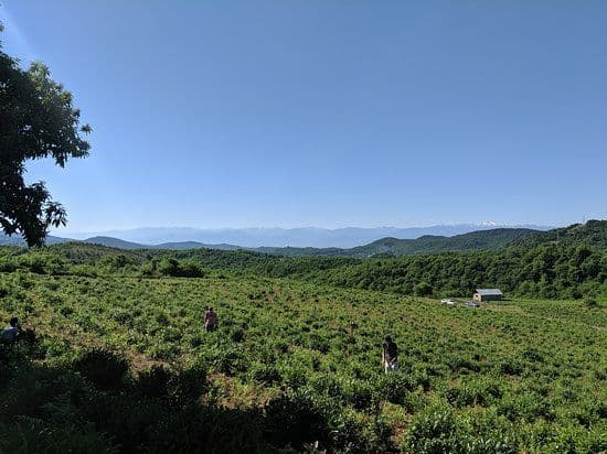 South Caucasus Farm Tour